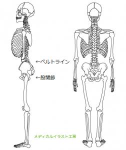 図4 ベルトラインと股関節 ベルトラインに曲げられる関節はない。曲げられるのは股関節だ。